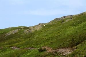 Mt Juneau, Peterson 160