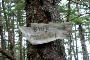 Pt Bridget (Blue Mussel, Cowie Creek) 051
